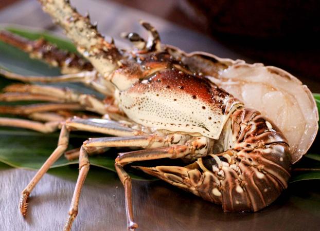 lobstar.jpg